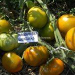 Супер томаты