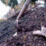 Томатное дерево выращивание в открытом грунте