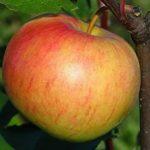 Как ухаживать за молодыми плодовыми деревьями