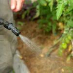 Чем полезна капуста свежая