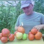 Лучшие сорта огурцов и томатов