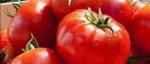Лучшие сорта помидор для урала