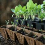 Подготовка почвы под огурцы весной