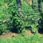 Сколько поливать огород
