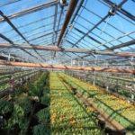 Грунт для выращивания рассады томатов
