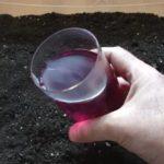 Черная смородина выращивание и уход