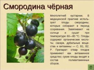 Смородина черная описание