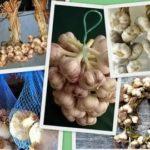 Хризантемы выращивание и уход