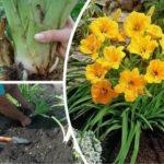 Салат азарт выращивание