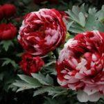 Как выращивать цветы из семян