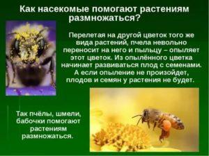 Как насекомые помогают растениям