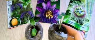 Маракуйя выращивание из семян