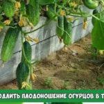 Классификация корней и корневых систем