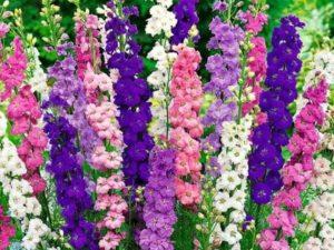 Садовые высокие цветы