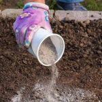 Выращивание руколы в открытом грунте