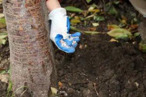 Удобрение деревьев осенью