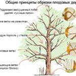 Выращивание рассады тыквы в домашних условиях