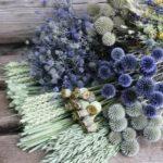 Чем подкормить декоративные кустарники