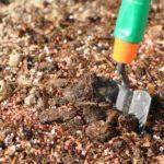 Как выращивать дыни на урале